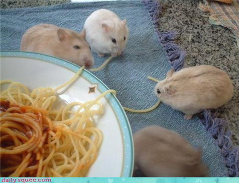 Suppertime via DailySquee