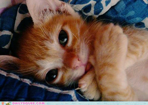 Oh good lord kitten, why you so cute?