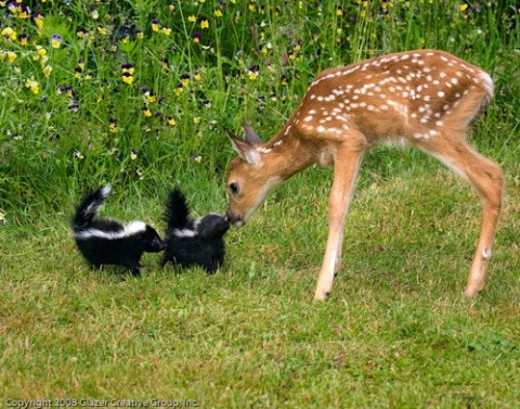 Real life Bambi and Flower