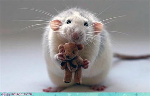 Mouse & Teddy from Daily Squee