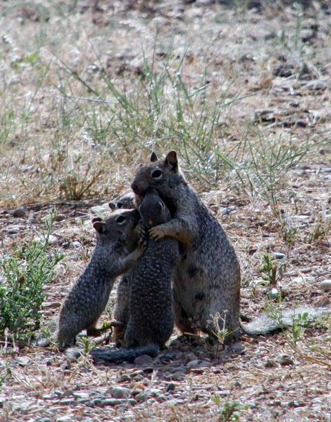 Group Hug via Daily Squee