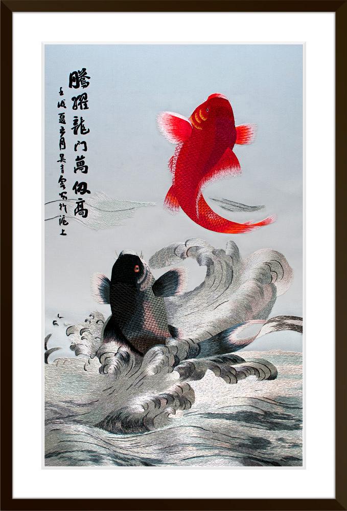 carp-jumping