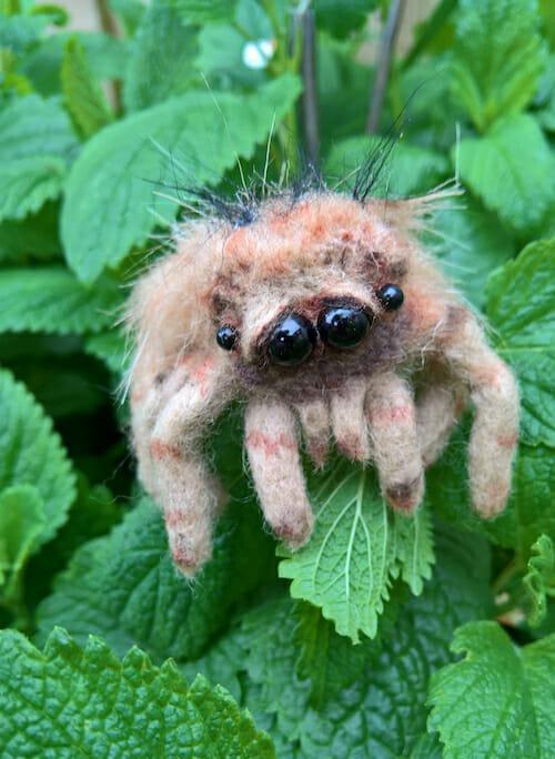 NoseyToes - Tarantula