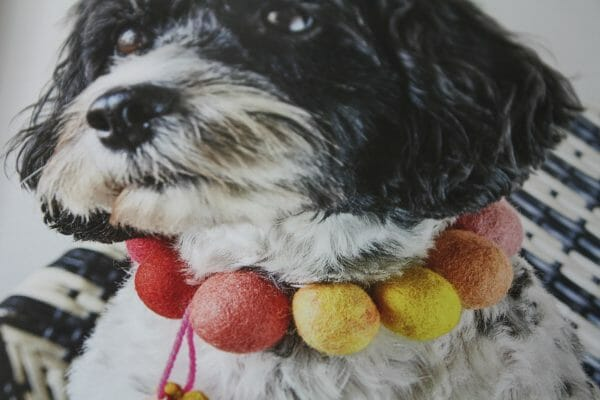 Harris shows us how every member of our family can wear felt, even our pooch!