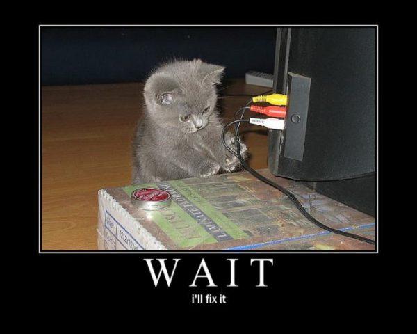 A Kitten Fixing A Computer