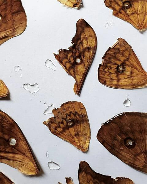 Moth wings, Inge Tiemens, Hand & Lock Prize for Embroidery winner